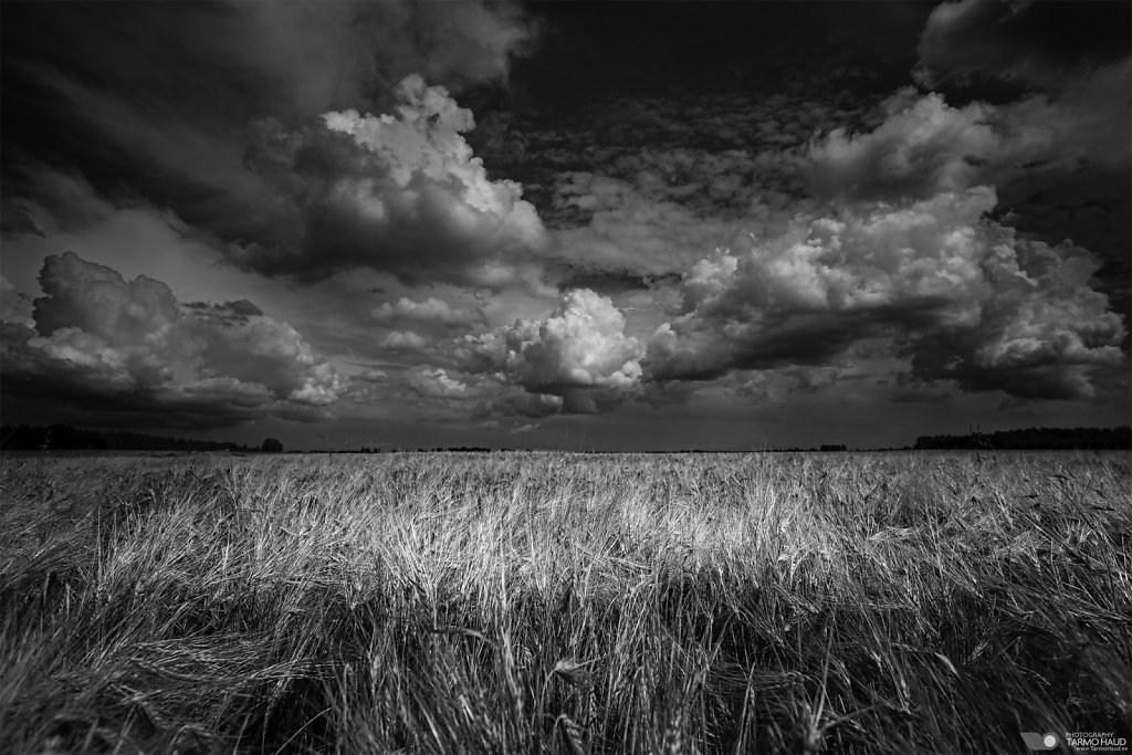 Field in BW